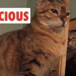 Ferocious Cats | Funny Cat Video Compilation 2017