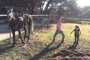Horse-Dances-with-Girls