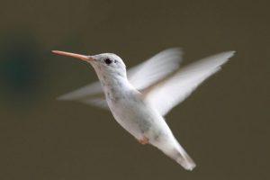 Hummingbirds-Ultra-Slow-Motion-Amazing-Facts-Full-HD