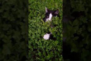 Peek-a-Boo-Bush-of-Kittens