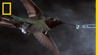 See-Hummingbirds-Fly-Shake-Drink-in-Amazing-Slow-Motion-National-Geographic
