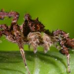 Spider with Three Superpowers