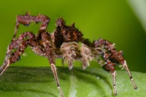 Spider-With-Three-Super-Powers-The-Hunt-BBC-Earth