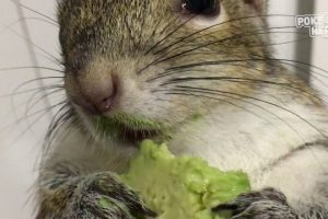 Squirrel-Loves-Avocado-Video-2017-Daily-Heart-Beat