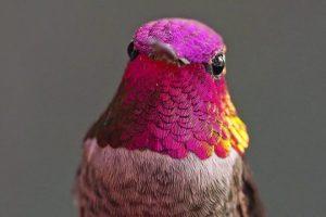 The-Hummingbird-Whisperer