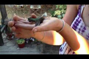 To-catch-a-humming-bird