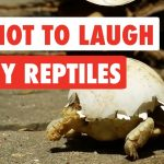 Try Not To Laugh | Funny Reptiles Video Compilation 2017