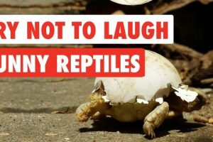 Try-Not-To-Laugh-Funny-Reptiles-Video-Compilation-2017
