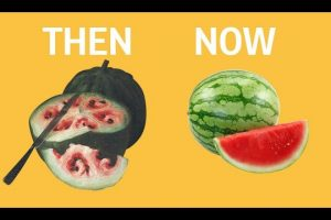 What-fruits-and-vegetables-looked-like-before-we-domesticated-them