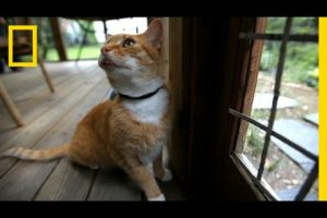 Where-Your-Cat-Goes-May-Blow-Your-Mind-National-Geographic
