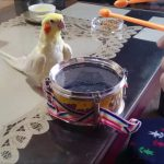 Bird on a Tiny Drum