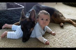 German-Shepherd-Protects-Babies-and-Kids-Compilation-The-best-Protection-Dogs