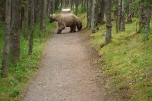 Hiking-With-Bears