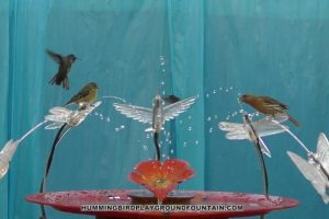 Hummingbirds-Bathing-10min-Community-Bath-with-Goldfinches-Housefinches-62516