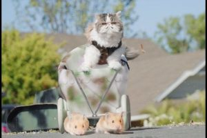 If-Cats-Ruled-the-World