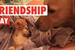 International-Day-of-Friendship-Funny-Unlikely-Pet-Friendship-Video-Compilation-2017