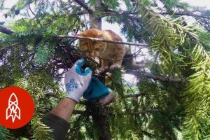 Rescuing-Cats-From-Super-Tall-Trees