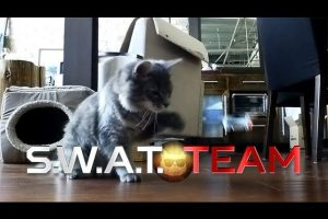 S.W.A.T.-Team-Cat-Edition