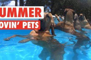Summer-Lovin-Pets-Funny-Pet-Video-Compilation-2017