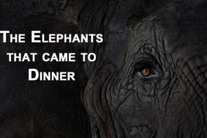 The-Elephants-that-came-to-dinner-Mfuwe-Lodge-Zambia