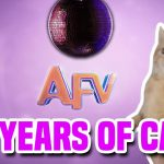 28 Years Of Cats | AFV