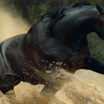 5 Horses You Won't Believe Actually Exist!