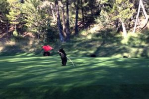 Baby-Bear-Circus-Act-on-Golf-Course-At-Fairmont-Hot-Springs-Resort-BC