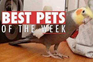 Best-Pets-of-The-Week-September-2017-Week-2