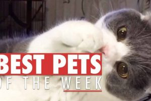 Best-Pets-of-the-Week-Compilation-September-2017