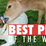 Best Pets of the Week | September 2017 Week 3