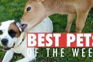 Best-Pets-of-the-Week-September-2017-Week-3