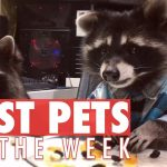 Best Pets of the Week | September 2017 Week 4