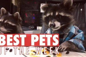 Best-Pets-of-the-Week-September-2017-Week-4