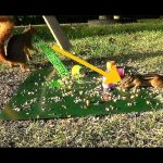 Squirrel Shoots a Slinky at Chipmunk