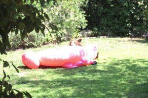 Cub-playing-with-inflatable-flamingo