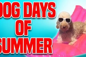 Dog-Days-of-Summer-Funny-Dog-Compilation