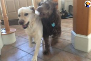 Dog-Reunites-With-Best-Friend-The-Dodo