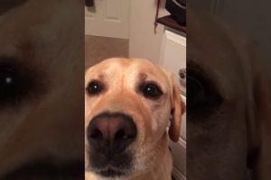 Dog-sings-harmonies