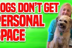Dogs-Dont-Get-Personal-Space-Funny-Dog-Compilation