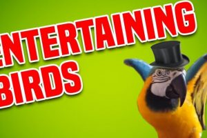 Entertaining-Birds-Funny-Bird-Compilation