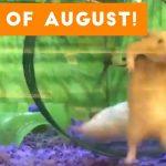 Funniest Pet Reactions & Bloopers of August 2017