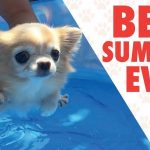 Pets Who Had A Better Summer Than You   Goodbye Summer 2017