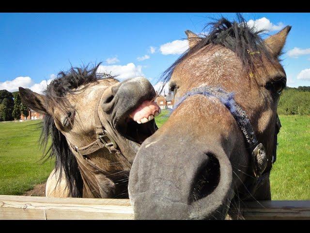 funny horse videos � 1funnycom