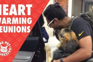 Try-Not-To-Cry-Dogs-Reuniting-With-Their-Owners