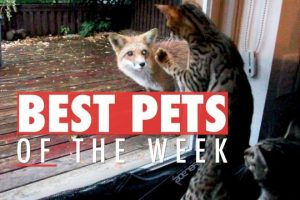 Best-Pets-of-the-Week-October-2017-Week-3