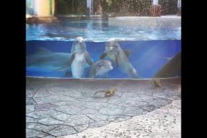 Dolphins-watching-squirrels