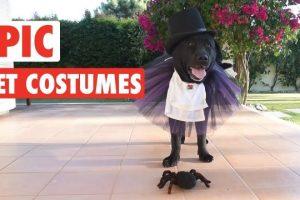 Epic-Halloween-Pet-Costumes-Tricks-or-Treats