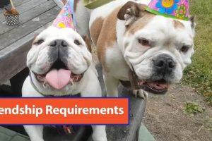 Friendship-Requirements