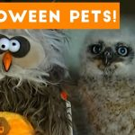 Funny Halloween Animals Compilation