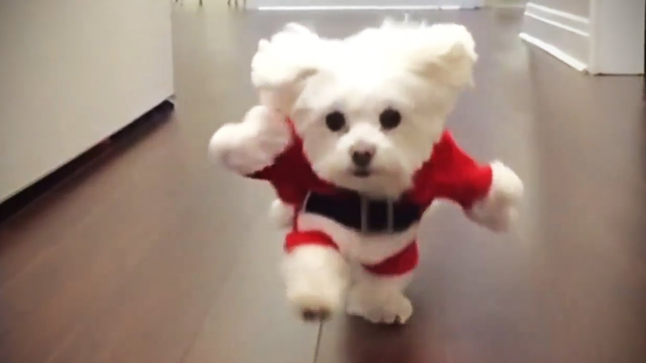 Pet Outfits For Dogs